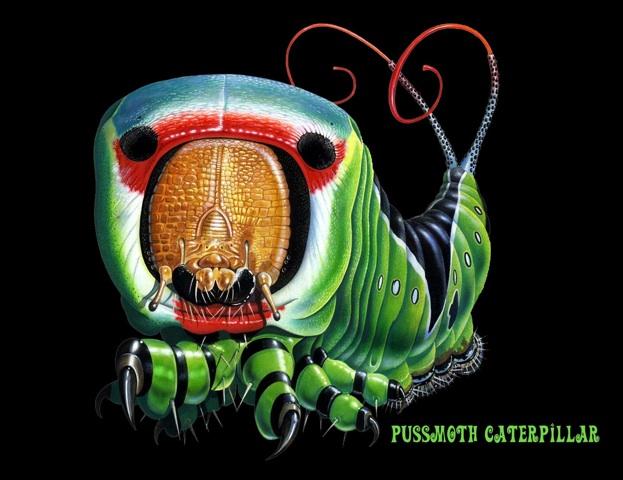 Pussmoth Caterpillar2