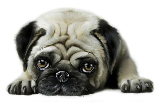 monica-pierazzi-mitri-animals-dog