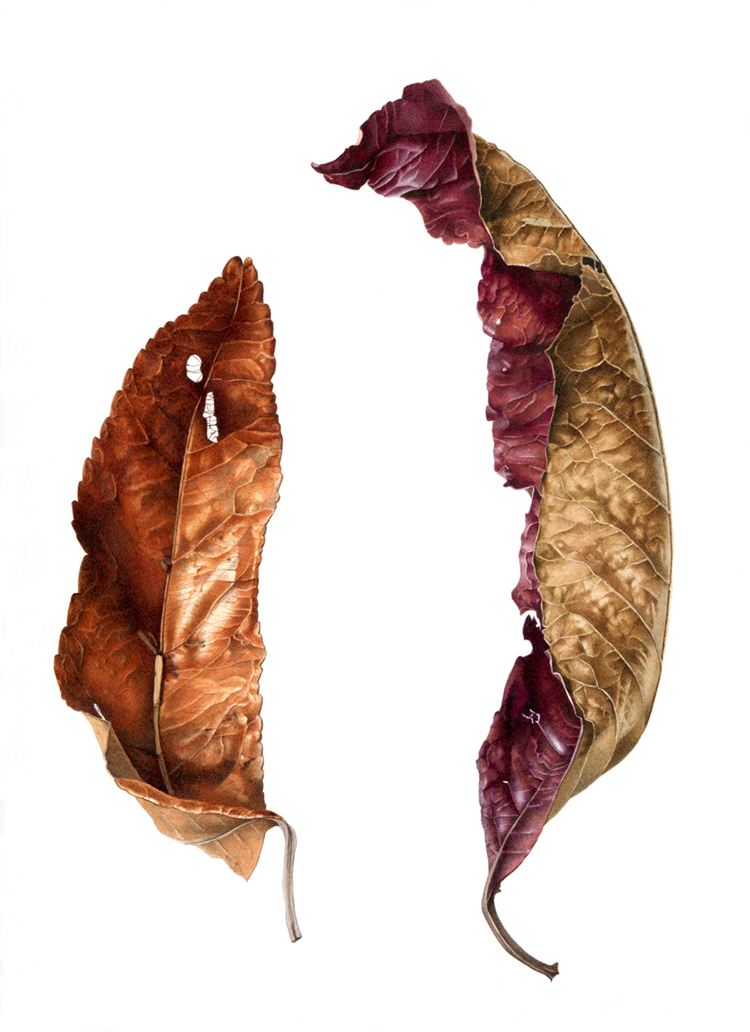 annhayesquondong leaves