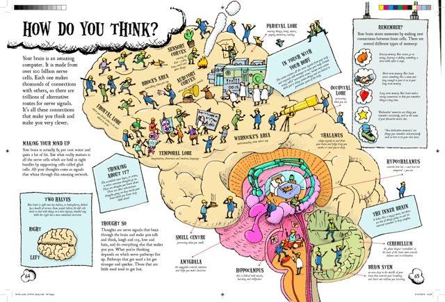 tim-hutchinson-brain